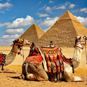 Giza Pyramids with Camels